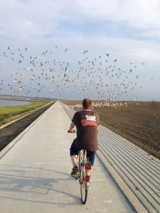Fahrradtour am Deichfuß nach Hooksiel
